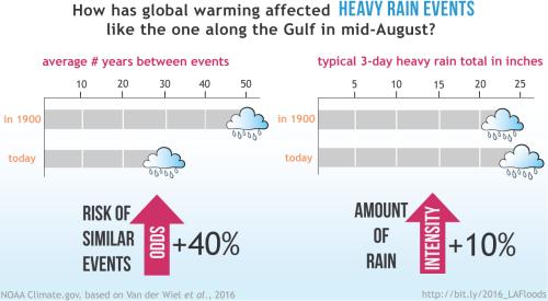 In augustus van dit jaar viel er in sommige delen in het zuiden van Louisiana meer dan 600 millimeter regen, door een traag bewegend noodweer. Tienduizenden inwoners werden geëvacueerd en er vielen zeker 12 doden. Een attributiestudie – waaraan in belangrijke mate werd bijgedragen door wetenschappers van het KNMI – toonde aan dat de kans op dergelijke extreme neerslag door opwarming van het klimaat is toegenomen van een keer per 50 jaar tot een keer per 30 jaar. In driedaagse regenperiodes die een keer per 30 jaar voorkomen valt nu 10% meer neerslag in dit gebied dan in 1900. (Bron: NOAA Climate.gov, gebaseerd op Van der Wiel et al., 2016)